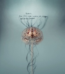08_brains-at-wellcome